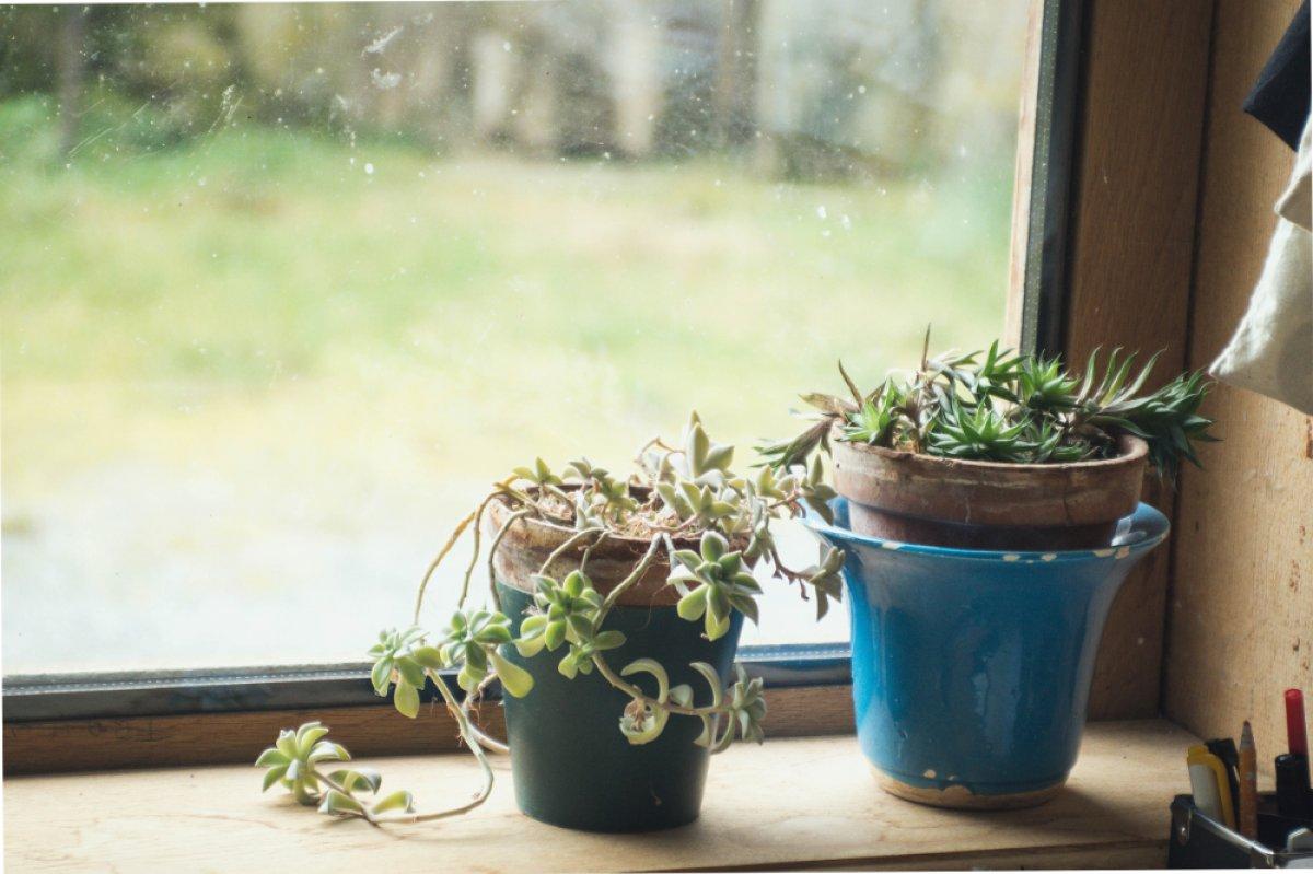 Bobines colorés, carnets et fleurs séchées, des plantes sur un rebord de fenêtre … des invitations à la tendresse et à la douceur.