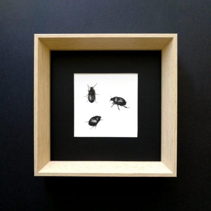Etude de coléoptères