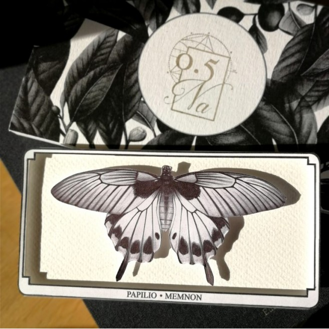 Papilio - Memmon